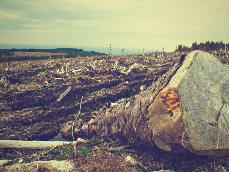 Kůrovcová Kalamita Vkrnovských Lesích: Tragédie Nebo Výzva Do Budoucna?